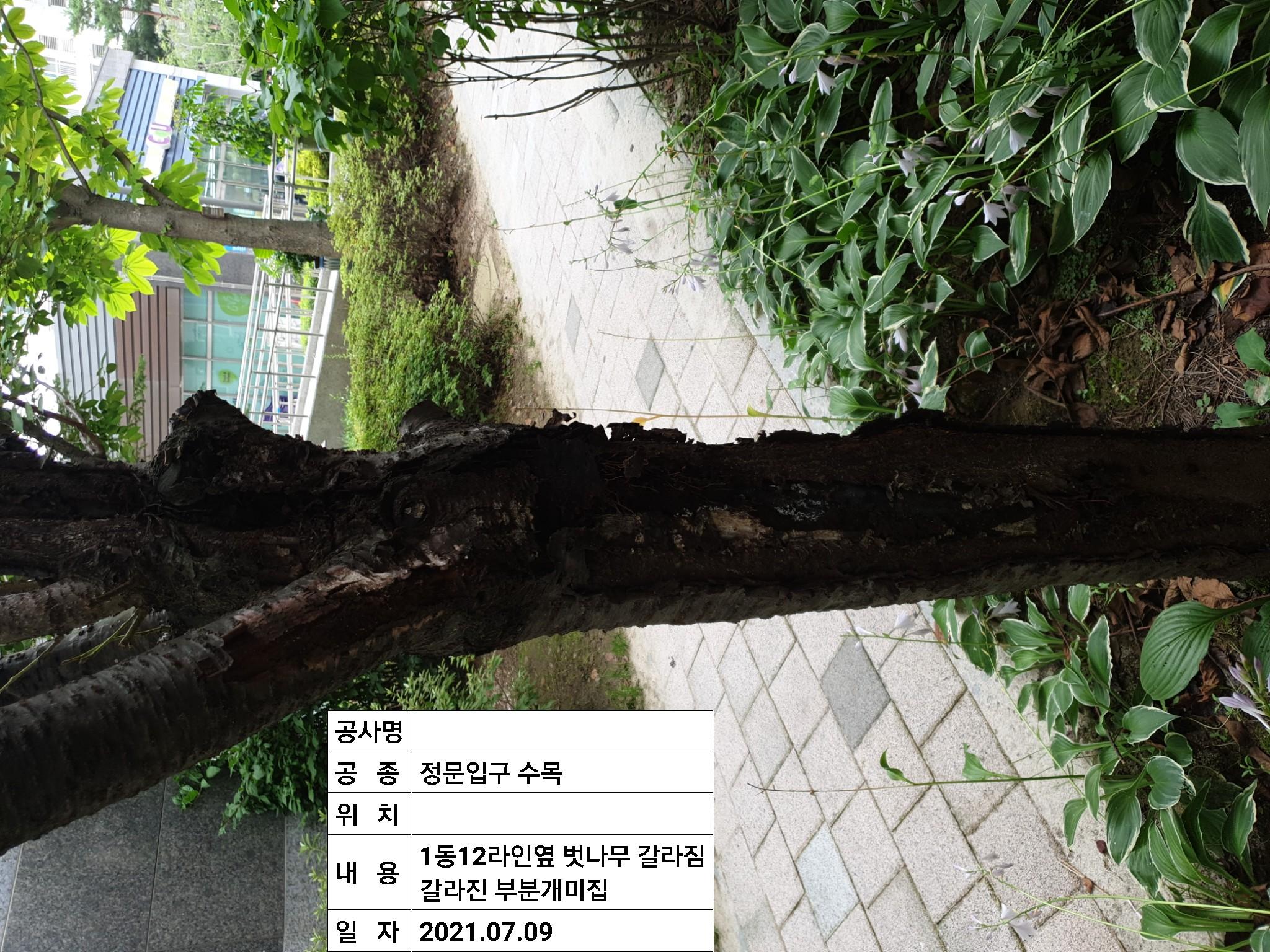 벗나무피해2